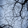 January Photo Challenge #6 Branches